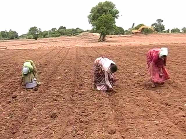 Video : Cotton Farmers in Telangana Distressed Over High Input Costs