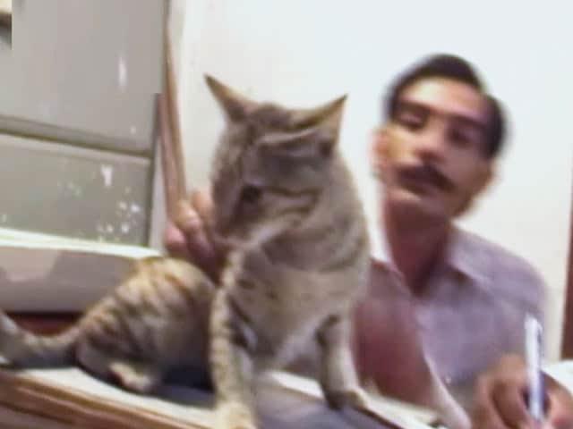 Videos : राजस्व विभाग की रखवाली में तैनात बिल्लियां
