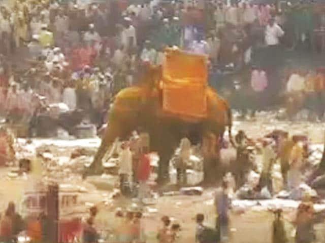 Video : महाराष्ट्र में बेकाबू हाथी ने एक को कुचला