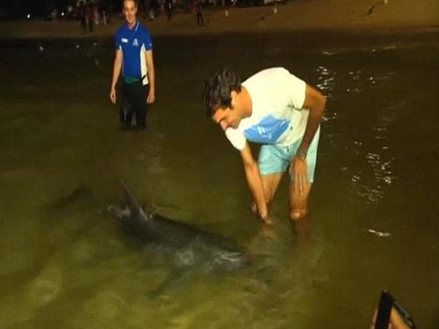 Video : Roger Federer's Date With Dolphins!