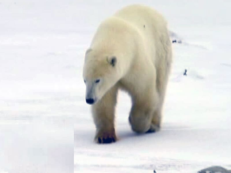 Video : Coming Soon: Svalbard - An Ode to Human Spirit