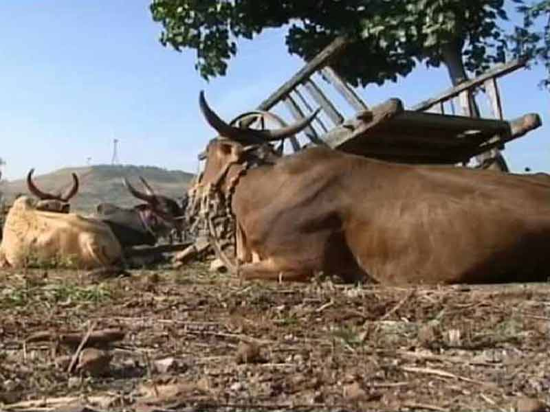 Video : Maharashtra Beef Ban: Eating Steak Can Land You in Jail for 5 Years