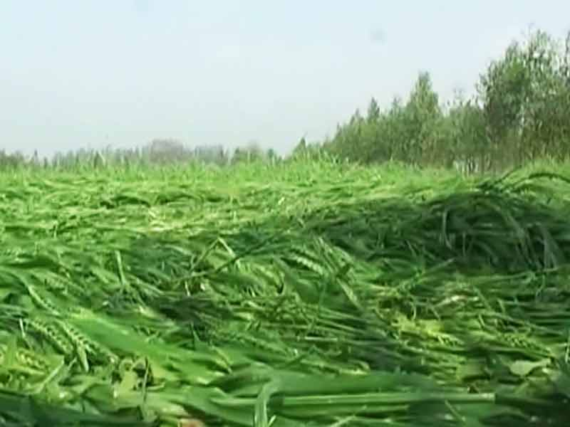 Video : Crops Hit by March Rains, Farmer Commits Suicide in Uttar Pradesh