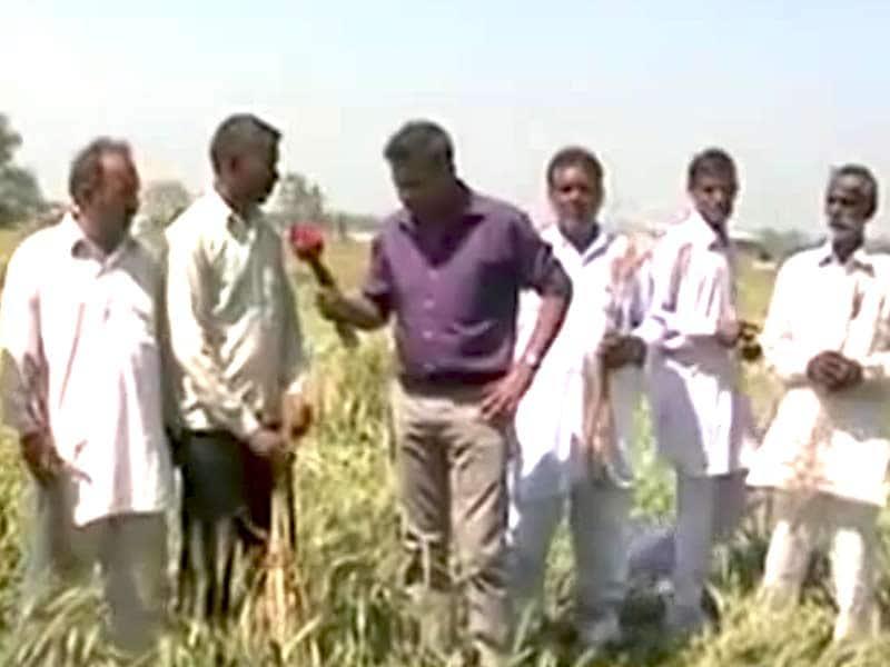 Video : फसल बरबाद होने से किसान परेशान, सरकार से मदद की मांग