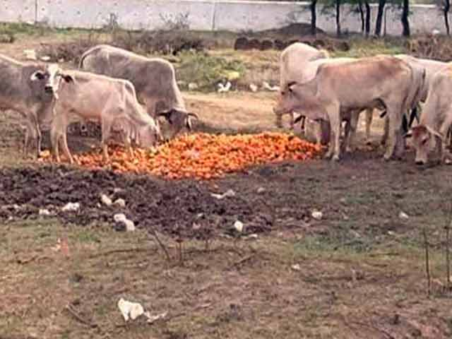Video : Unseasonal Rains in Madhya Pradesh Damage Orange Crop and its Market