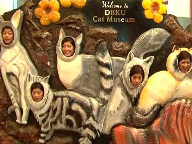 Video : Quirky Museums: Kitty Catty in Malaysia