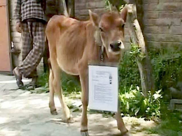 Videos : देखिए शिक्षा व्यवस्था का हाल, गाय का बन गया एडमिट कार्ड