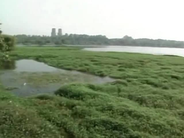 Video : As Bengaluru's Lakes Die, Karnataka Seems Without a Road-map to Save Them