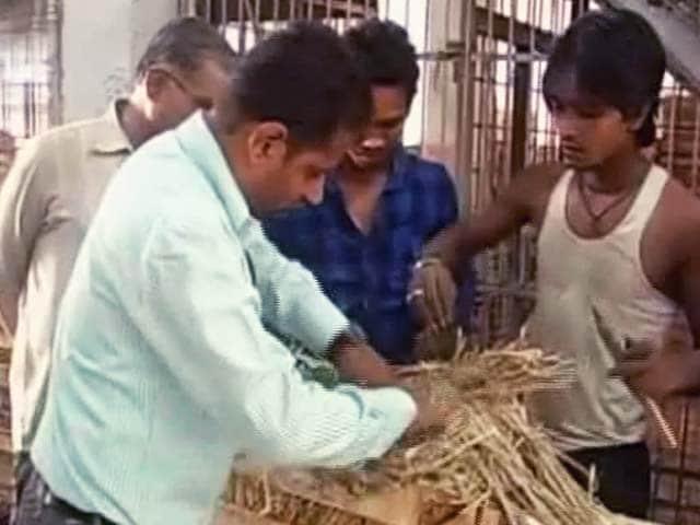Videos : आम को पकाने में हो रहा है लोगों के स्वास्थ्य से खिलवाड़