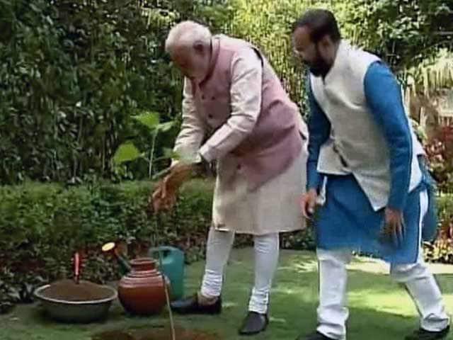Video : On World Environment Day, PM Modi Plants a Sapling