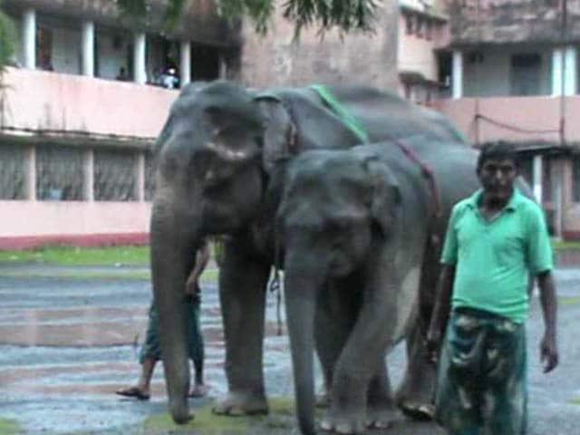 Video : 2 Elephants in an Assam Court in Cross-Border Custody Battle