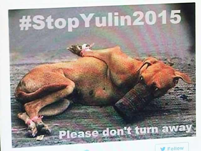Videos : चीनी कुत्तों पर हो रहे अत्याचारों के ख़िलाफ़ खड़ी हुई बॉलीवुड की कई हस्तियां
