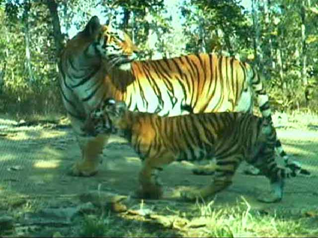 Video : Bor Tiger Reserve
