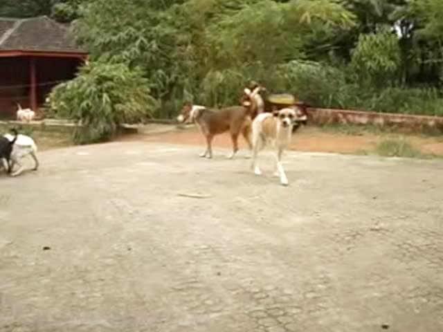 Video : Street Dog 'Menace' Worries Kerala Leaders