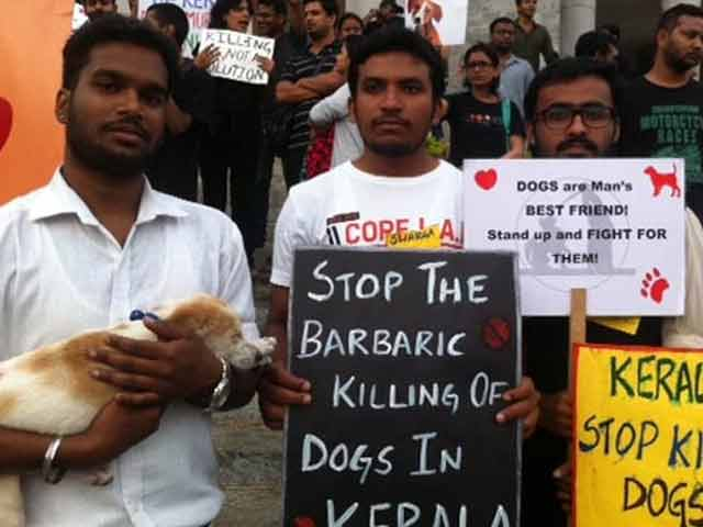 Video : Bengaluru's Animal Lovers Protest Against Culling of Street Dogs by Kerala