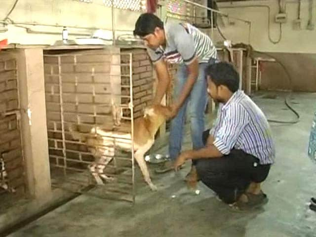 Video : Kolkata Civic Body Faces Heat After Reports That Dogs Drowned in its Pound