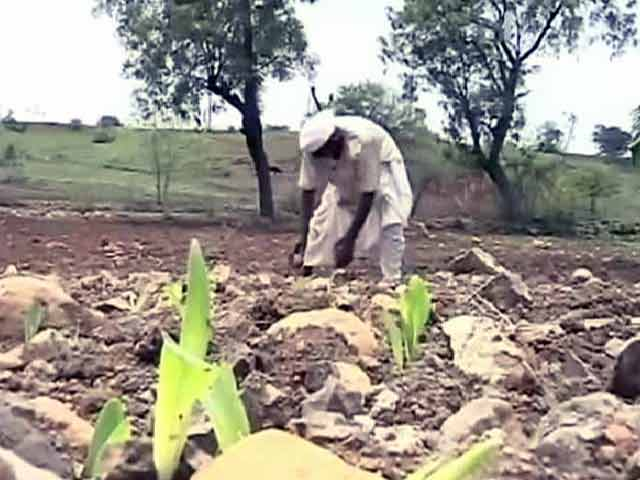 Video : 50% Farmers Committing Suicide in Drought-Hit Marathwada Are Under 40