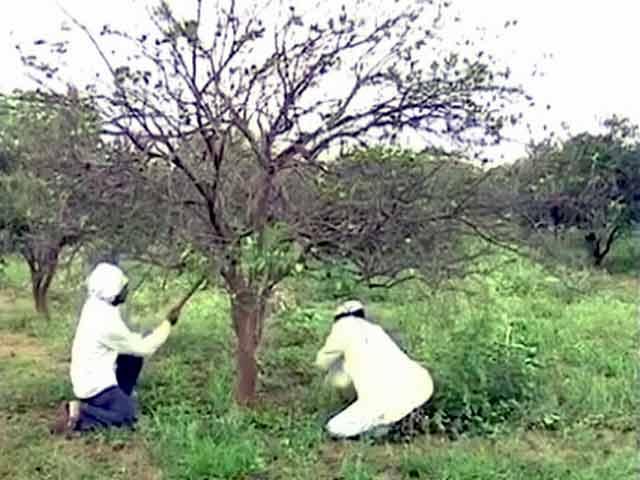 Videos : महाराष्ट्र में सूखे की वजह से मिट्टी हुआ मराठवाड़ा का 'सोना'