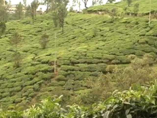 Video : As Munnar Women Continue Protests, Tough Times Ahead, Say Tea Estates