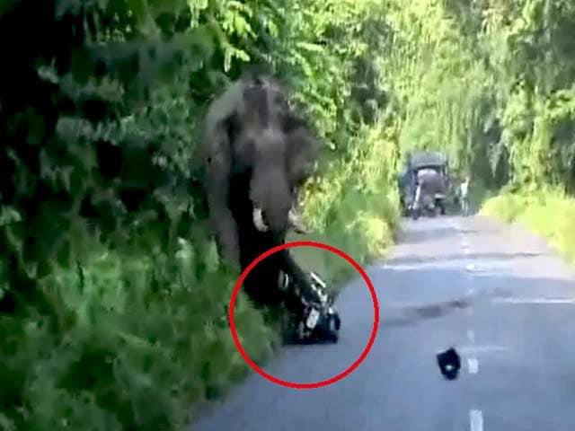 Video : पश्चिम बंगाल : हाथी ने किया हमला, बाइक सवार बाल बाल बचे