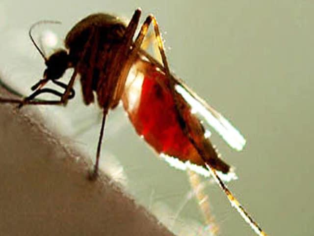 Videos : रिपोर्ट :  जानें डेंगू किस तरह से हमारे शरीर पर हमला करता है