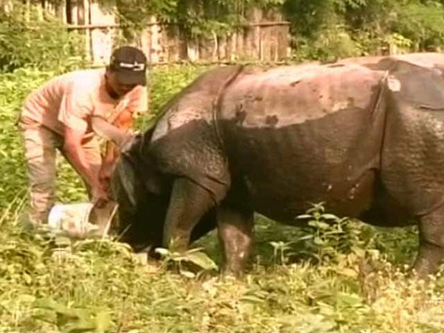 Video : How This Ex-Poacher has Taken to Conservation of Assam's One Horned Rhino