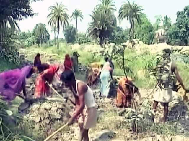 Video : बिहार में मनरेगा की जमीनी हकीकत