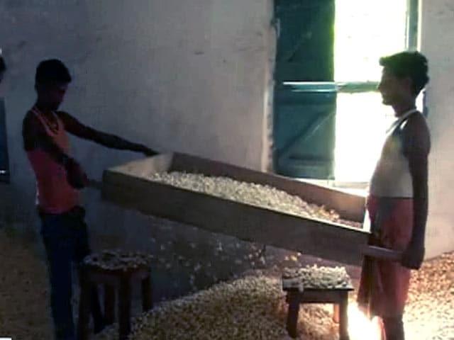 Video : मेरा गांव मेरा देश : मुधबनी में मखाना किसानों की बदहाली