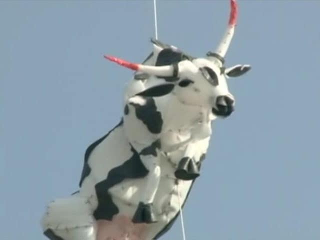 Video : Row Over Hanging of Dummy Cow at Jaipur Art Summit