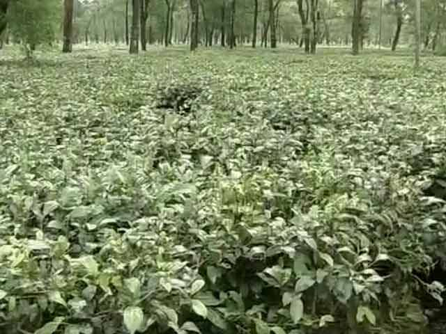 Video : North Bengal Tea Garden Workers Facing Hunger Death Promised Relief