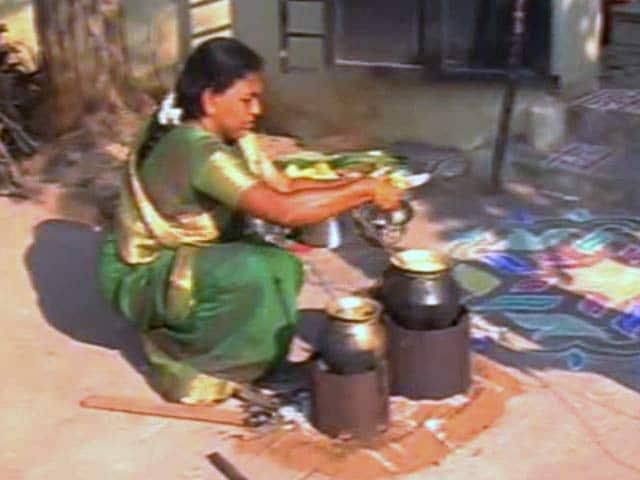 Video : Dull Pongal Celebrations In Tamil Nadu Amid Hold On Jallikattu
