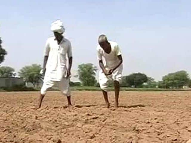 Video : Farmer Suicides Rising in Punjab. Here's Why.