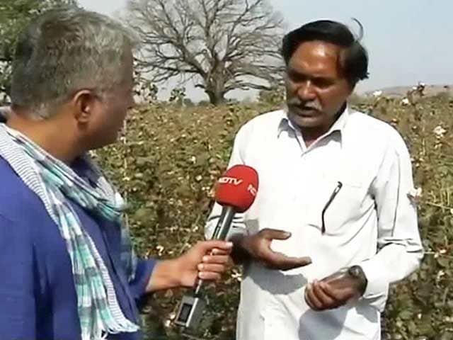 Video : Why Cotton Farmers In Maharashtra's Yavatmal Are Unhappy With BJP