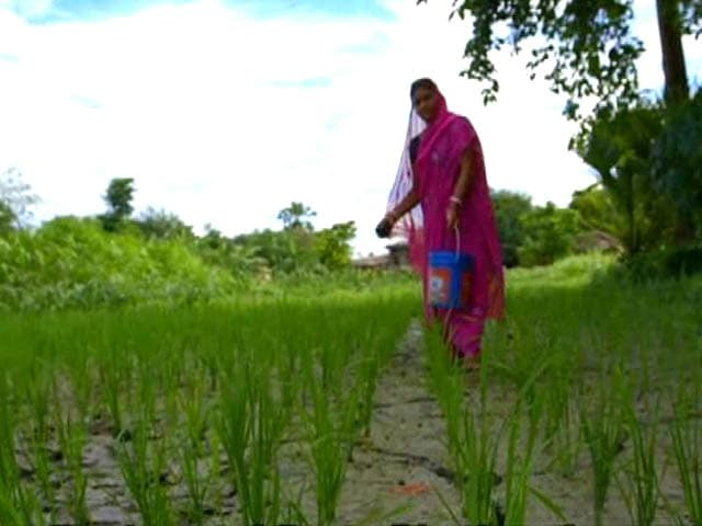 Video : Cultivating Hope: Shift in Gender Roles in the Agriculture Sector