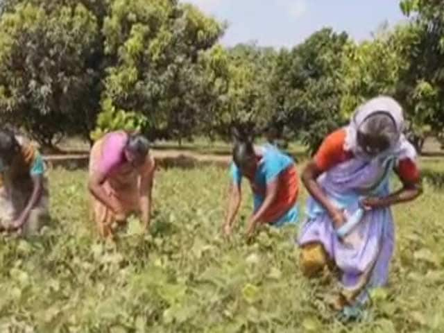 Video : Women of Worth: Meet the Nominees of Business and Environment