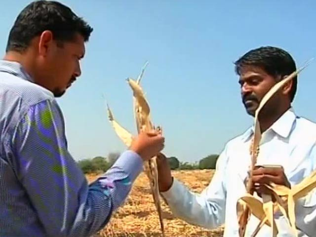 Video : 6% Water Left In Marathwada Dams, Farmers Blame Government For Suicides