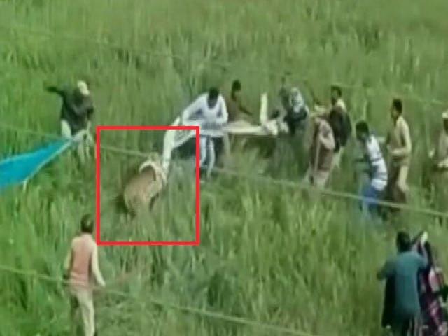 Video : उत्तराखंड में रिहायशी इलाके में घुसा तेंदुआ, कड़ी मशक्कत के बाद पकड़ा गया