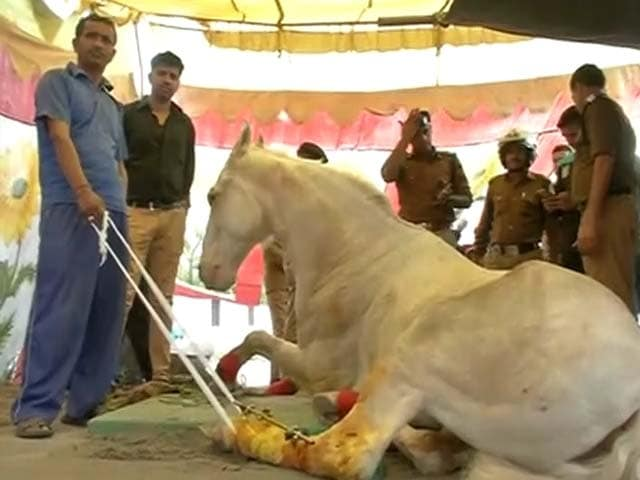 Video : Video Shows BJP Leader Didn't Hit Horse Who Is Visited By Chief Minister