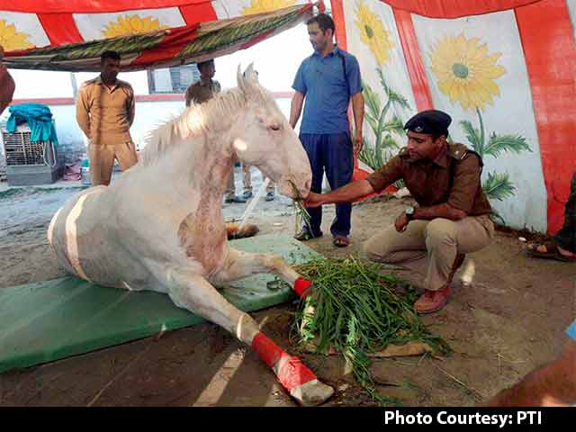 Video : Horse Recovers After 5-Hour Surgery; 'Accident,' Says BJP Lawmaker