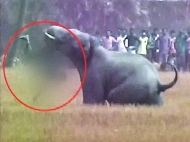 Elephant Attack: Latest News, Photos, Videos on Elephant ...