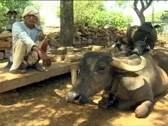 Video : Madhya Pradesh Villagers Have A Tough Choice: Go Thirsty Or Starve