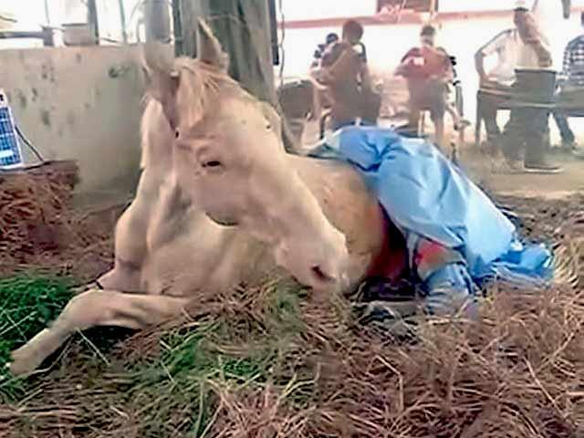 Videos : बीजेपी के विरोध प्रदर्शन के दौरान घायल हुए पुलिस के घोड़े शक्तिमान की मौत