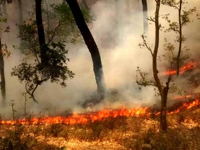 Video : जंगलों में भीषण आग के लिए चीड़ का अंधाधुंध विस्तार कितना जिम्मेदार?