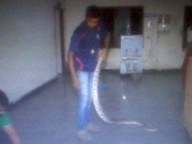 Video : Snake Slithers Into A Police Station In Hyderabad