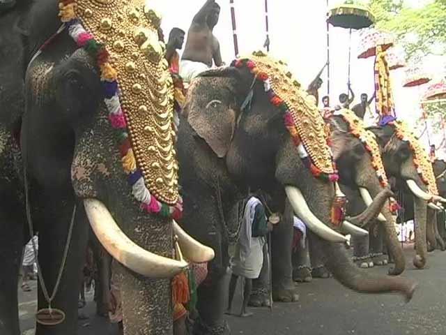 Video : 'Gods In Shackles': Elephant Agony Reaches Kerala Assembly