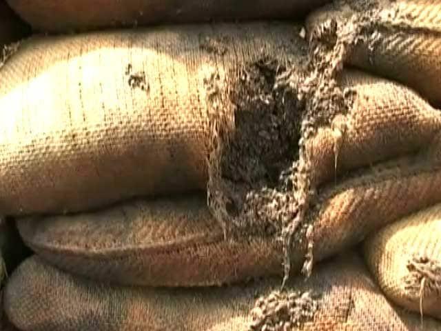 Video : पंजाब में गेहूं की रिकॉर्ड पैदावार के बाद अब रिकॉर्ड स्तर पर सड़ रहा है अनाज