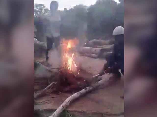Video : Video Of Boys Burning Puppies Alive In Hyderabad Sparks Outrage
