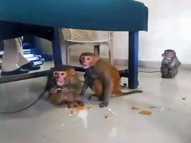 Videos : मुंबई : तीन बंदरों को पुलिस ने हिरासत में ले लिया