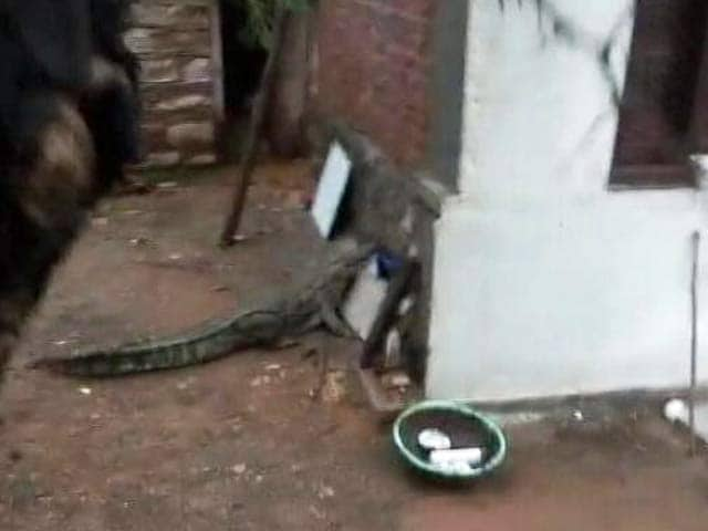 Video : Madhya Pradesh Family Wakes to an Unfriendly Visitor - a Crocodile