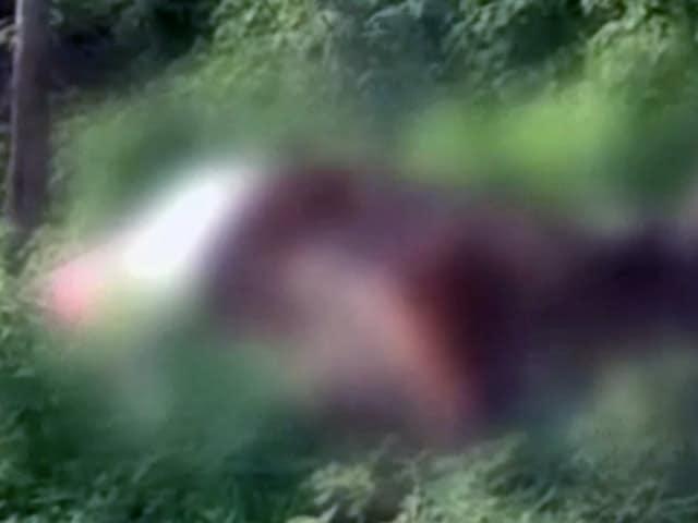 Videos : गुजरात में दलित आंदोलन का असर, गायों के शव दफनाने वाला कोई नहीं
